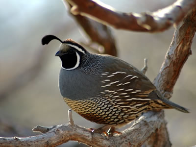 Though a desert climate, Scottsdale boasts diverse wildlife